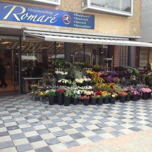 Bloemen- en Cadeaushop Romare image 2