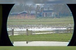Zondag 1 en 8 maart 2020 Vogelkijkdagen bij Fort K'IJK